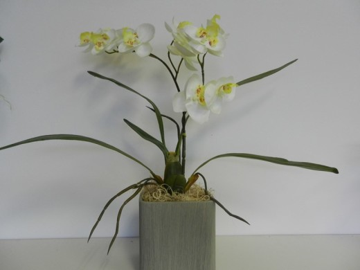 Orhideja21