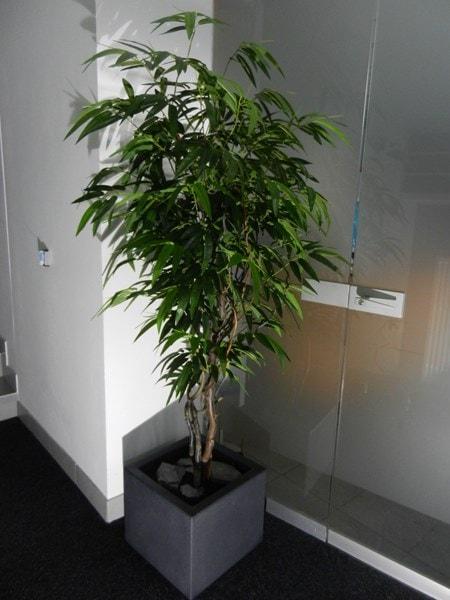umetno Tropsko drevo